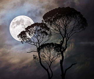 Witches and the Moon